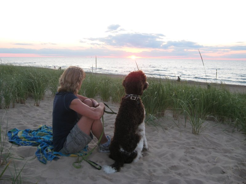 Image Result For Standard Poodles For Sale In Wisconsin