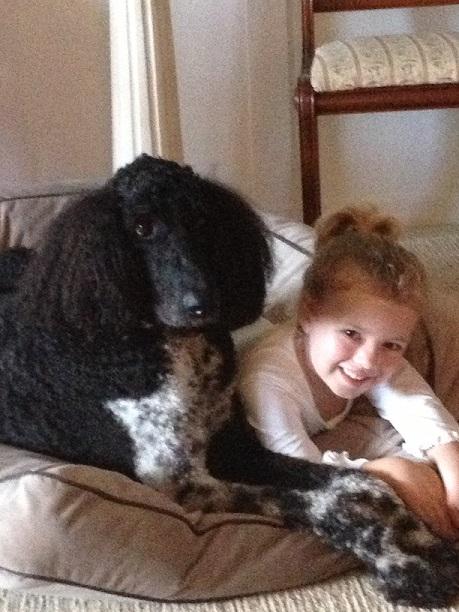 Testimonial – Standard Poodle 'Rex's Family'