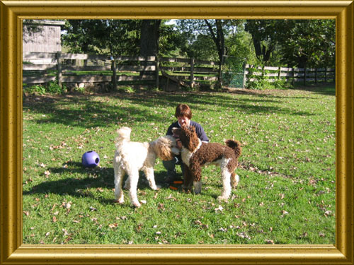 Standard-Poodles-Nick_and_Caleb_and_I_playing_ball
