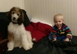 red.poodle.pup.in.crate.with.baby2.jpg