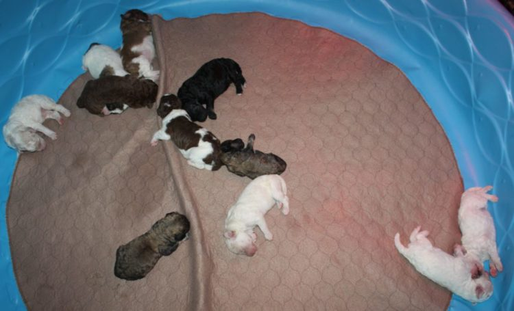 Peaches and Bandit had Puppies!
