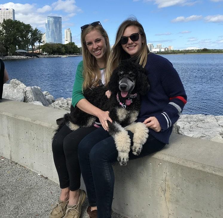 Testimonial – Standard Poodle 'Fitzpatrick Family'