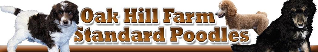 Oak Hill Farm Standard Poodles header image